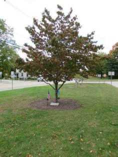 johnston memorial tree